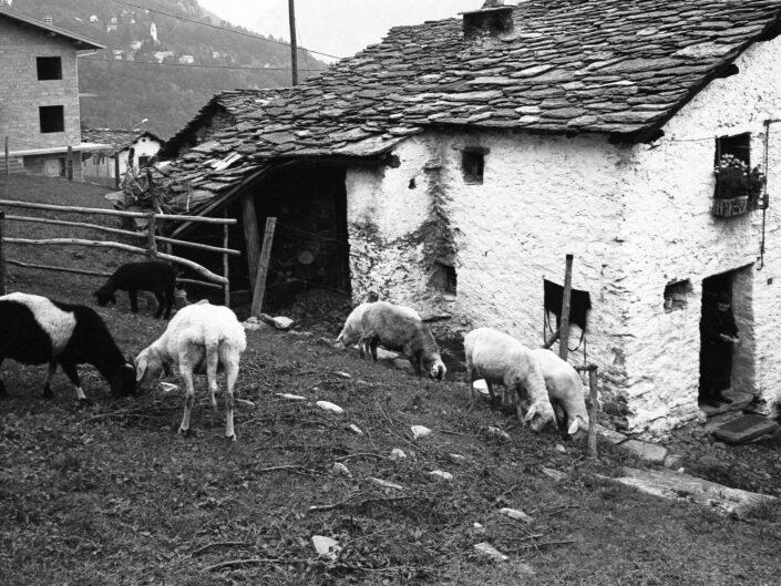 Fondo Carlo Tancredi Olmo Valle del Drogo SO 1981 10 scaled