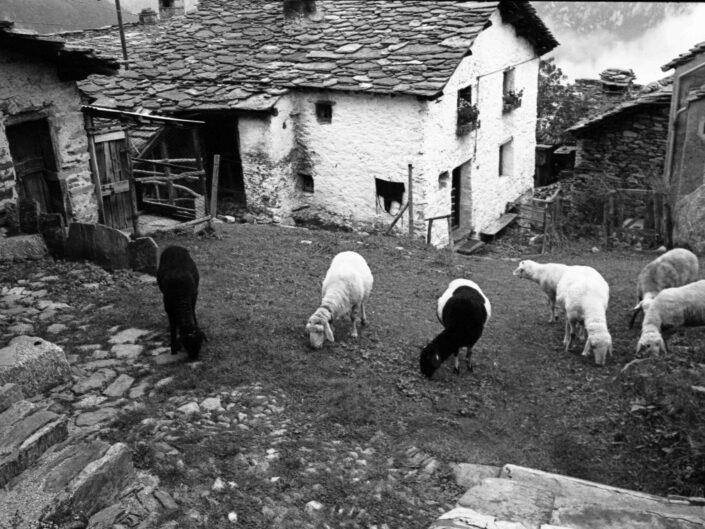 Fondo Carlo Tancredi Olmo Valle del Drogo SO 1981 13 scaled