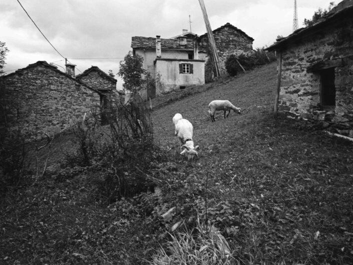 Fondo Carlo Tancredi Olmo Valle del Drogo SO 1981 15 scaled