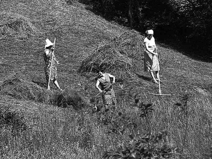 Fondo Carlo Tancredi Olmo Valle del Drogo SO 1981 4