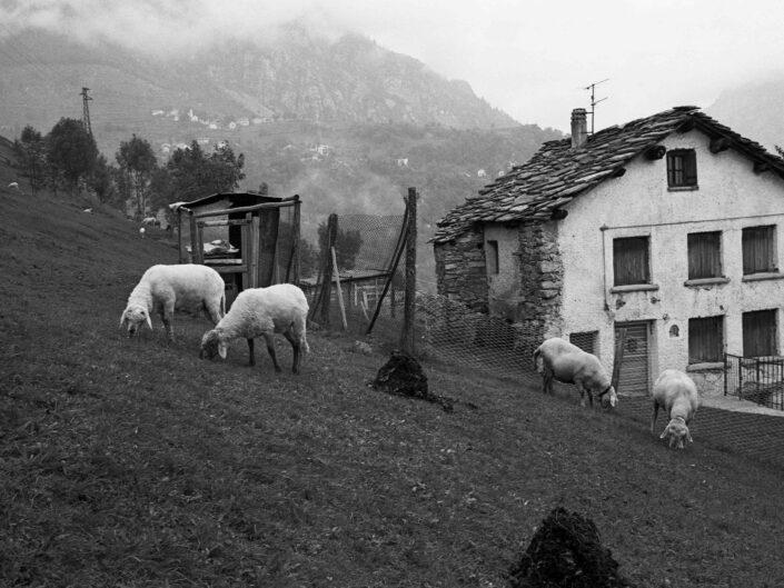 Fondo Carlo Tancredi Olmo Valle del Drogo SO 1981 9 scaled