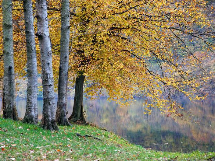 Fondo Afi - Ghirla - Veduta autunnale sul lago - Foto Luigi Meroni e Sergio Luzzini - 2008