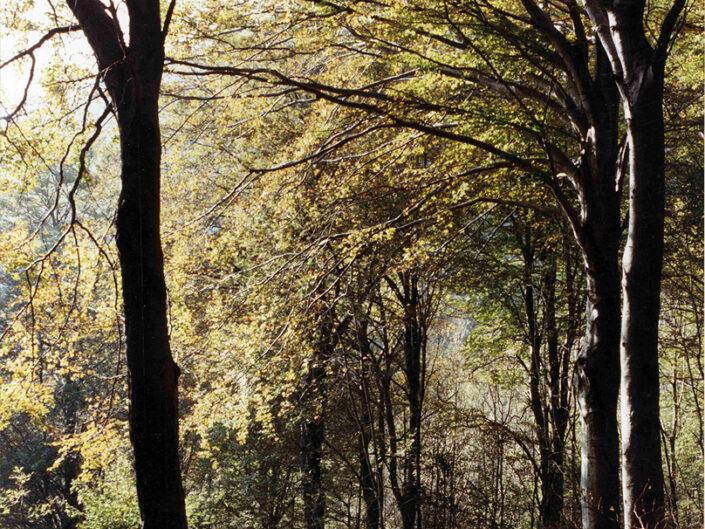 Fondo Afi - Varese - Parco naturale del Campo dei Fiori - Boschi - Foto Roberto Bosio - 1992