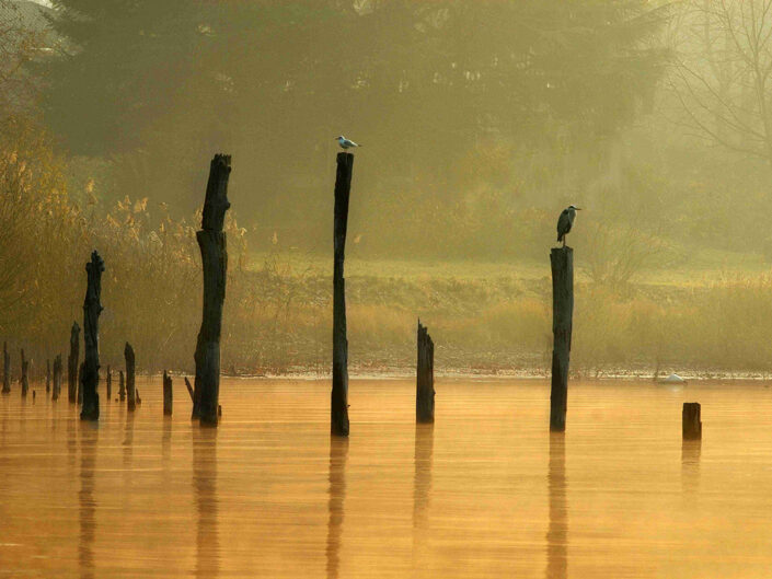 Fondo Afi - Varese - Paesaggio di lago con fauna - Foto Luigi Meroni e Sergio Luzzini - 2008