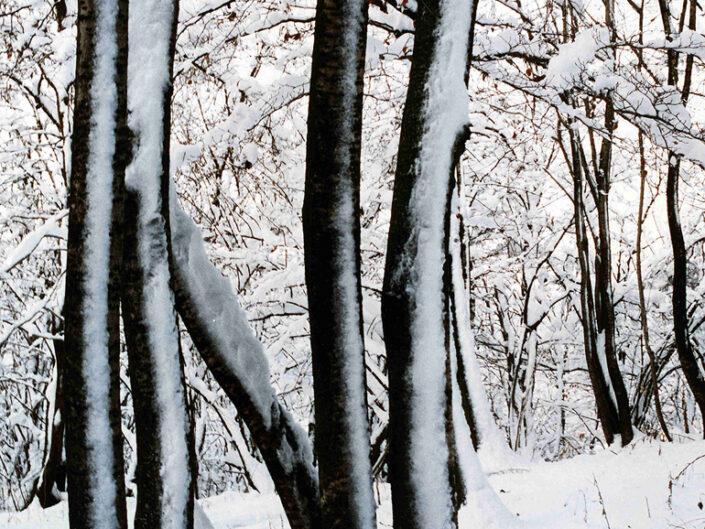 Fondo Afi - Varese - Parco naturale del Campo dei Fiori - Foreste innevate - Foto Claudio Argentiero - 1991