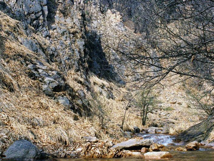 Fondo Afi - Varese - Parco naturale del Campo dei Fiori - Località Val Castellera - Foto Saverio Fantacuzzi - 1993