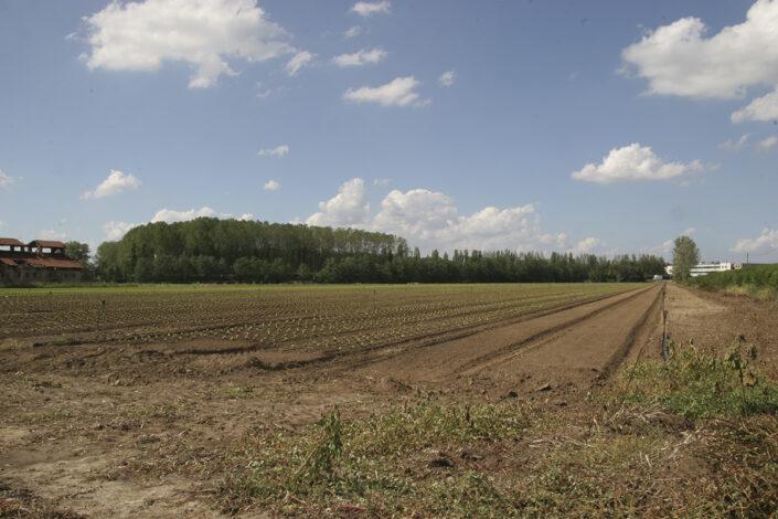 Fondo Roberto Bosio - Parco Agricolo Sud Milano - Caleppio di Settala - Paesaggio - Agosto 2006