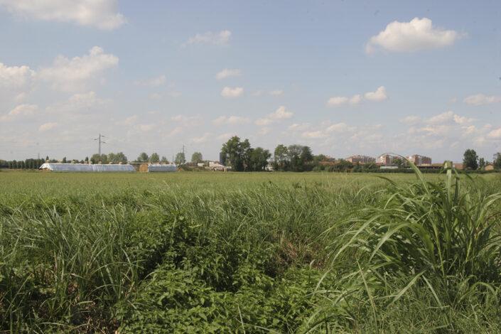 Fondo Roberto Bosio - Parco Agricolo Sud Milano - Mediglia - Paesaggio - Agosto 2006